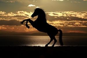Hästsiluett på stranden