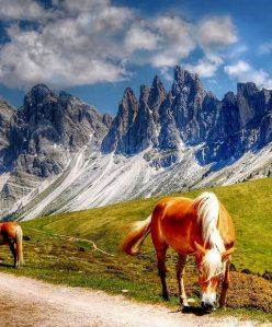 En brun häst
