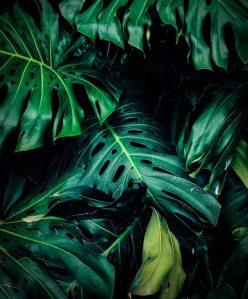 En stor grön växt